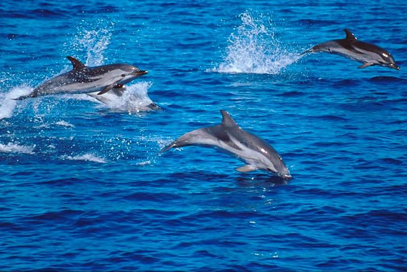 discutiile delfinilor
