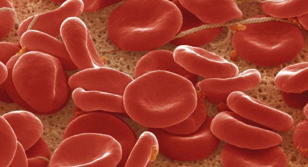 sange-artificial